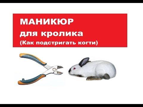 Маникюр для кролика. Как подстригать когти