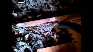 Using McGyvered Shop Vac to suck insulation out of attic