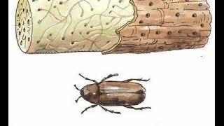 видео Защита древесины от влаги, огня, насекомых и гниения: обзор средств