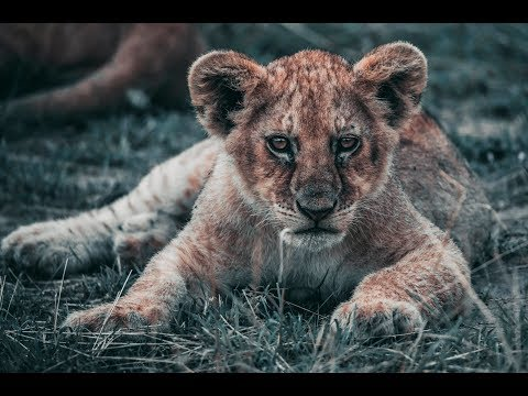 MAASAI MARA TRAVEL VLOG || ASHNIL CAMP || SHARON MACHIRA