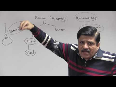 Pituitary & Hypothalamus: I - Chemical Coordination - Dr. NK Sharma | NEET AIIMS | Video Lectures