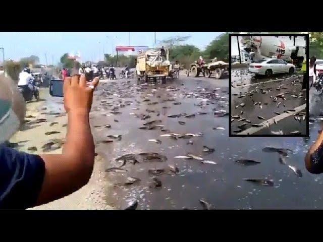 Se registran lluvias de peces en Irán, China e India.