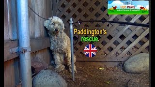 Paddington - homeless and lonely... can you help him?