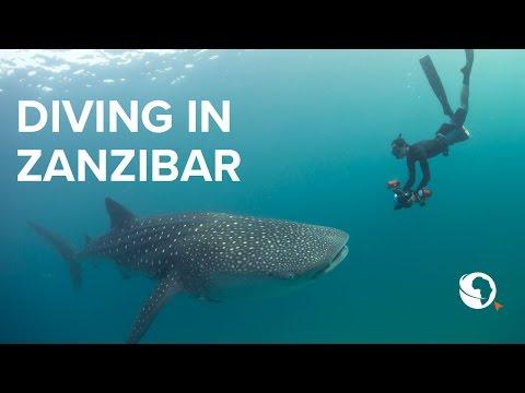 Go Diving: Zanzibar, Tanzania