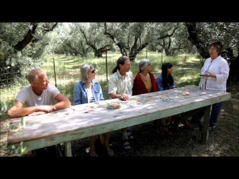 Berkeley Olive Grove Organic Premium Extra Virgin Olive Oil Tasting