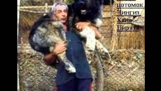 Собаки Грузии!