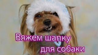 Как связать шапку собаке мастер-класс