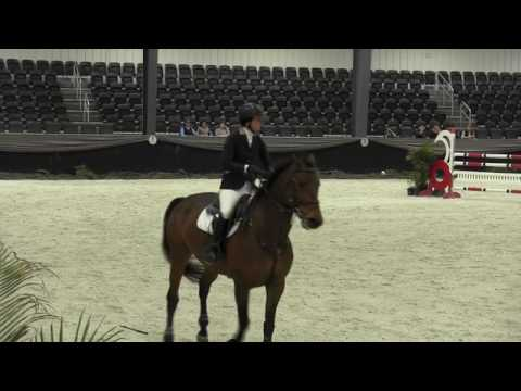 Video of CASINO ROYAL ridden by ASHLEY MARSHALL from ShowNet!