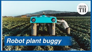 A robot plant buggy that scans crops and collects data