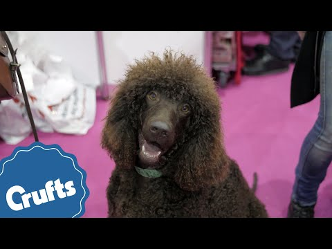 Which dog breed is right for you? Find out at Discover Dogs 2017!