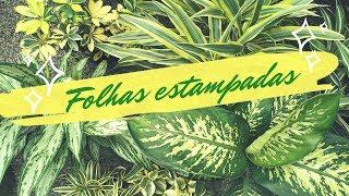 5 Plantas com as Folhas Estampadas