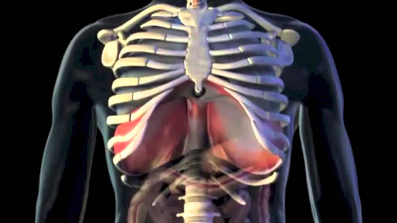 Lung Ventilation System : Pulmonary ventilation youtube