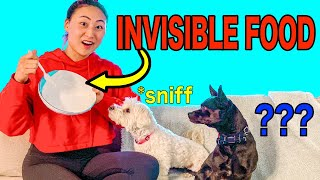 MY DOG REACTS TO INVISIBLE FOOD!