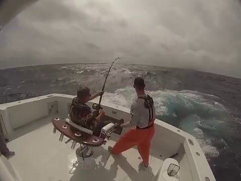 Blue Marlin Fishing- Gulf Mexico-out of Long Boat Key, Florida- Part 1