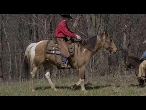 Building a better trail horse Part 1