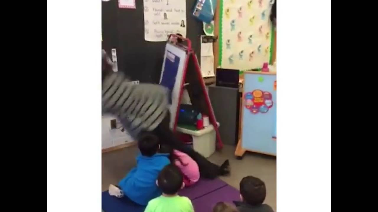 SHOWING UP FOR WORK LIKE... | Hilarious Vine (TEACHER FACEPLANTS) September 2016