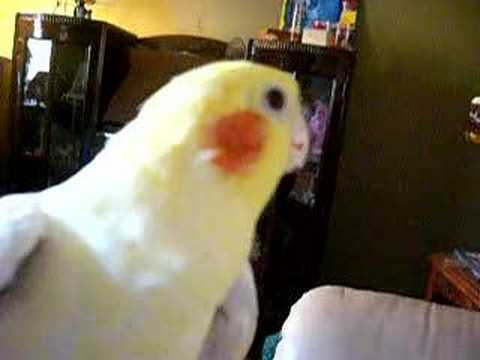 My Bird Tilly Beat Boxing