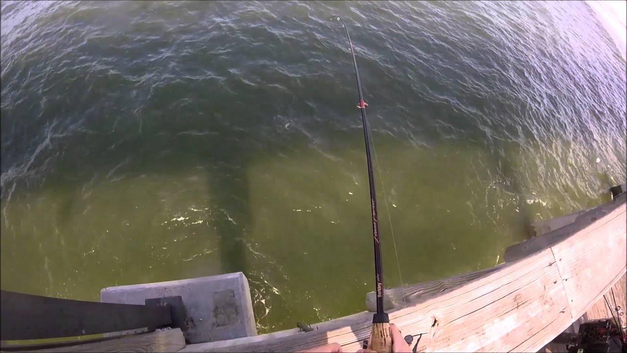 Baby bluefish bit me gulf shores alabama pier fishing for Pier fishing gulf shores al