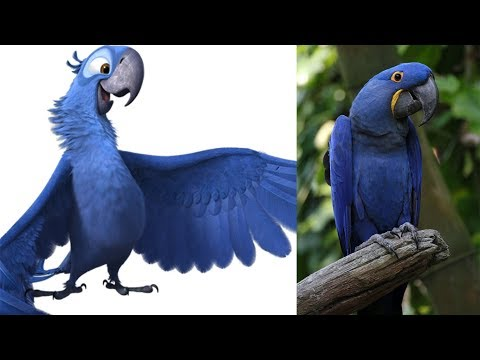 Rio 2 Characters in Real Life ALL CHARACTERS
