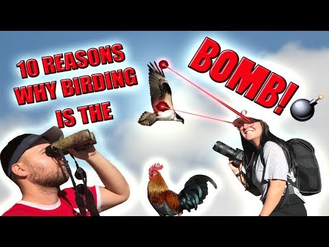 Ten Reasons Why Watching Birds Is AMAZING (birding and bird photography) Mp3