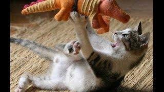 Смешные приколы с участием кошек. Видеоролик.