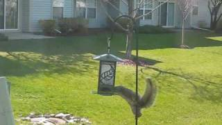The Relentless Squirrel
