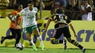 Palmeiras x Novorizontino - campeonato paulista - Quartas de final
