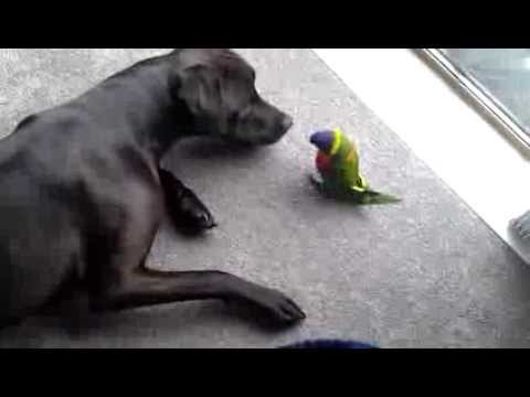 Dog And Lorikeet Are Best Friends