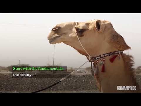 How to spot a beautiful camel in Oman