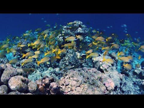 Snorkel in COMO COCOA ISLAND