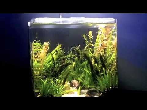 Nano planted fish tank led lighting aqueon evolve 2 gallon for Fish for 2 gallon tank