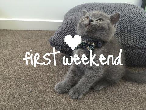 First Weekend Home | Alfie the British Shorthair kitten