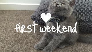 First Weekend Home | Alfie the British Shorthair kitten