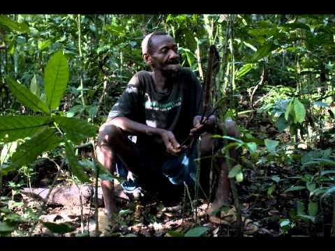 Mbuti Pygmies: The Forest is Everything