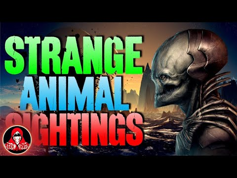 15 UNEXPLAINED Animal Sightings