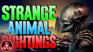 15 UNEXPLAINED Animal Sightings - Darkness Prevails