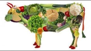 Сквашивание - основа Природного здоровья и питания.