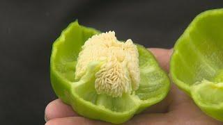 長野県CATV2020年度連携:信州の伝統野菜①ぼたごしょう(信濃町)