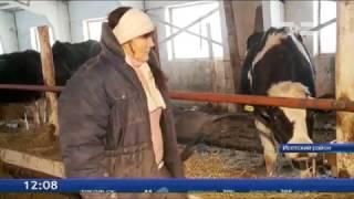 В Тюменской области ожидают молочный бум