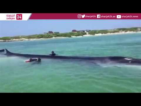 Beached whale near Mexican coast successfully returned to sea