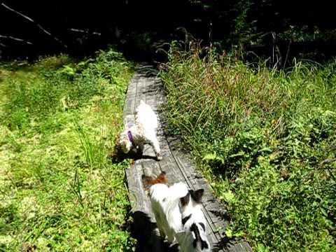 Exploring A Peat Bog At Dyken Pond Nature Preserve