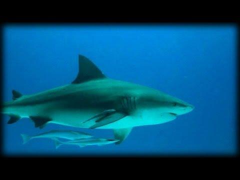 Bull Sharks 03 Music