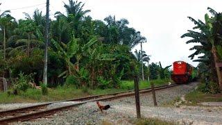 Tragis! Detik-detik Kereta Api Putri Deli Menabrak Seekor Ayam