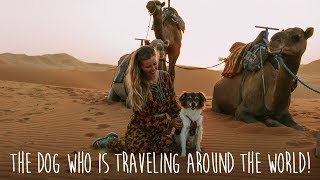 Traveling with dog around the world by backpacking, hitchhiking