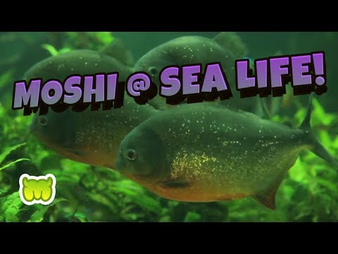 Join the Moshi Marine Force at SEA LIFE!