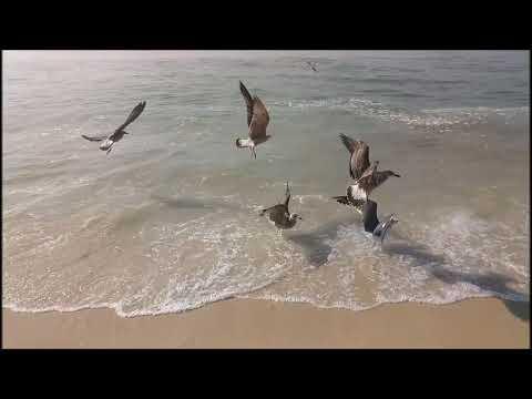 Vieira de Leiria *** mar / gaivotas / peixe / pesca.......praia...