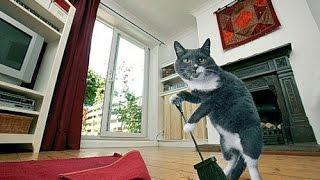 Смешное видео с котами Приколы с котами.  Кот трудяга или рабочий день кота  & funny kittens