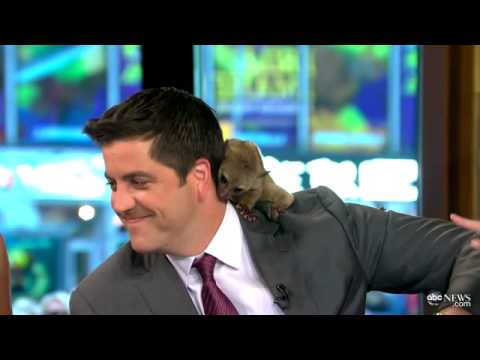 Animal Poops on  Anchor: TV  Bloopers 2012
