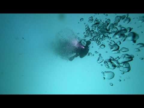 Fujiairah barracuda diving Deep reef 20180223