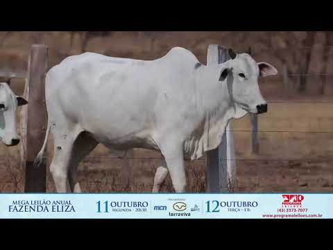 LOTE 159